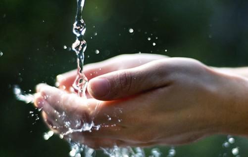 Italia promotrice di un progetto su acqua e cibo telecolor for Cibo tartarughe acqua
