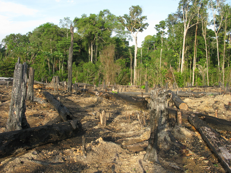 is naprosyn harmful effects of deforestation