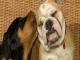 immagini anfibi per cani e gatti.mpg.Immagine002