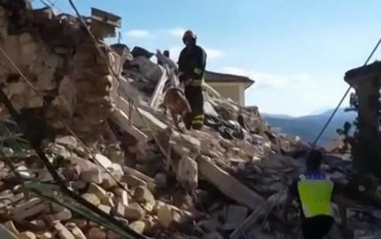 cani terremoto