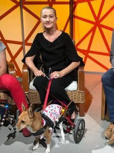 Bike for animals e cani disabili