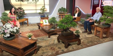 Bonsai e Giardini Zen