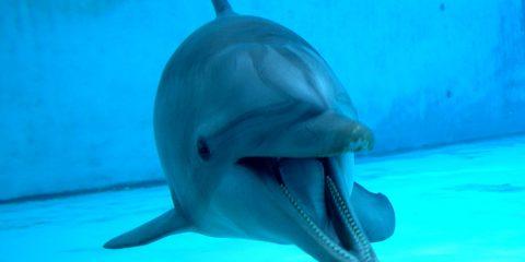 delfina pelé