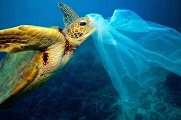 biodegradabile