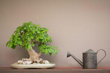rimedi bonsai